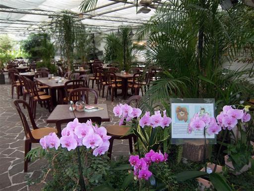 Orchideen netzer caf orchidee birkenau hornbach 69488 yellowmap - Marc de cafe orchidee ...